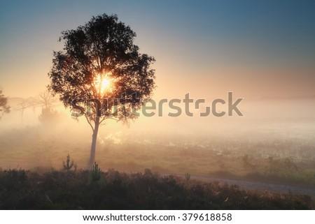 sunshine through tree during misty morning, Noorth Bradant, Netherlands - stock photo