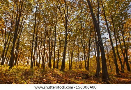 Sunshine through trees with colorful fall foliage in the Berkshires of Western Massachusetts. - stock photo