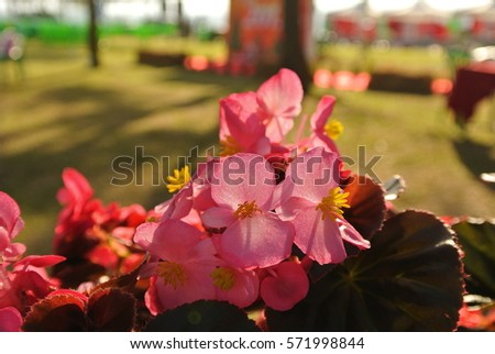 Sunshine touching Pink flower with blurred background