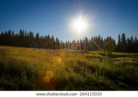 sunstar over the forest in the hill - stock photo