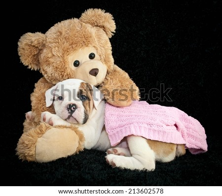 Super cute Bulldog laying in the arms of a great big teddy bear on a black background.