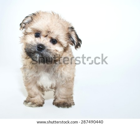 Super cute puppy tilting her head looking very curious about something