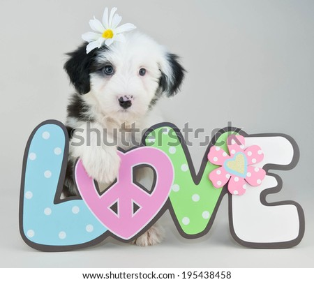 Super cute Sheepdog puppy sitting with a love sign with a Daisy flower in her hair.