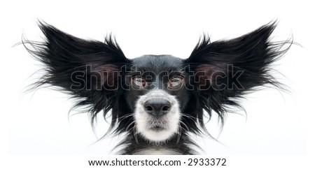 super dog on a white background - stock photo
