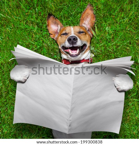 super funny face dog lying on back on green grass reading blank newspaper - stock photo