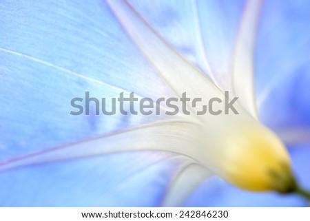 super macro shot of flower for beautiful background - stock photo