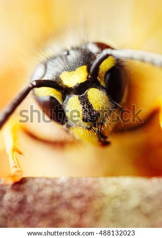 Super macro wasp head. Shallow focus