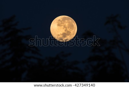 Super Moon With Trees As a Foreground