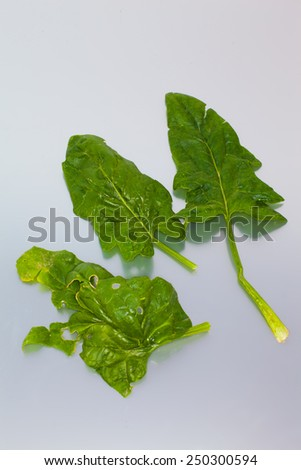 super organic no-perfected spinach  - stock photo