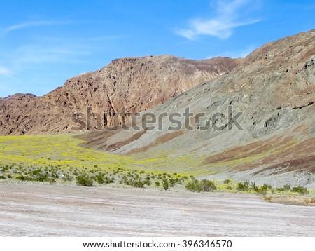 Superbloom Death Valley 2016 - stock photo