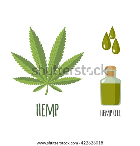 Superfood hemp set in flat style: hemp leaves, oil. Organic healthy food. Isolated objects on white background.  - stock photo