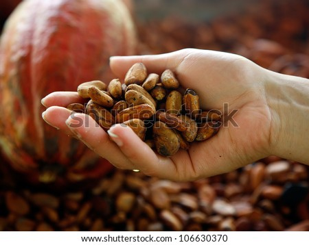 Superior view of handful of cacao beans - stock photo