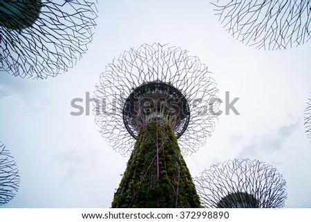 Supertree Grove, Gardens by the Bay,Raining day before sunset , Singapore - stock photo