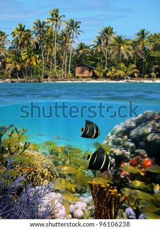 Surface and underwater view of a tropical beach with a hut under coconut palm trees and split by waterline a school of fish in a coral reef , Caribbean sea, Panama - stock photo