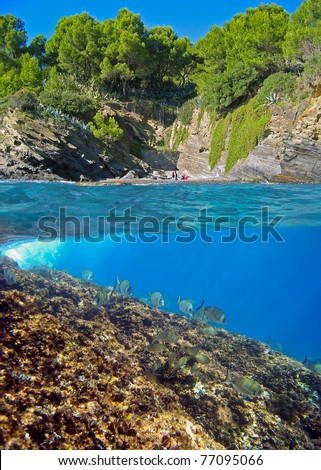 Surface and underwater view, small cove with beautiful vegetation and school of fish over rock , Mediterranean sea, Costa Brava, Spain - stock photo