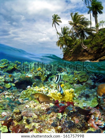 Surface and underwater view with colorful coral reef fish, coconut trees and cloudy sky, Caribbean sea