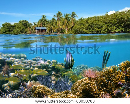 Surface and underwater view with coral reef fish, a bungalow and lush tropical vegetation, Bocas del Toro, Panama, Caribbean sea - stock photo