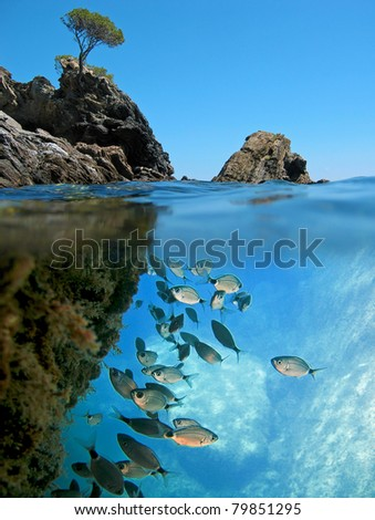 Surface and underwater view with rocky islet and school of Saddled Seabream fish  Mediterranean sea, Cadaques,  Catalonia, Costa Brava, Spain - stock photo