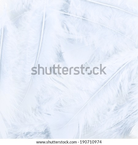 Surface covered with the white feathers as a background texture composition - stock photo