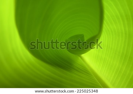 Surface in banana leaf with sunlight. - stock photo