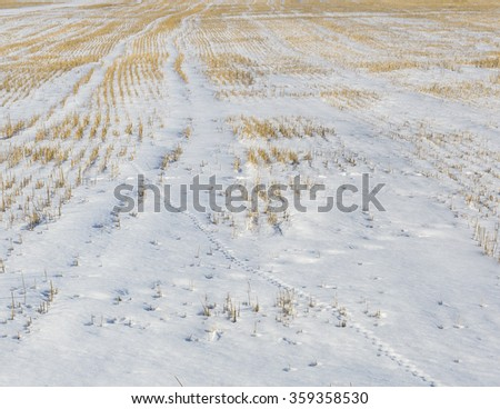 Surface of a field covered with snow - stock photo