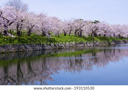 Surface of a lake and row of cherry blossom trees