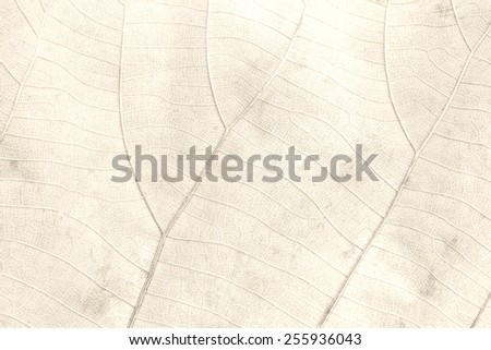 Surface of leaves.