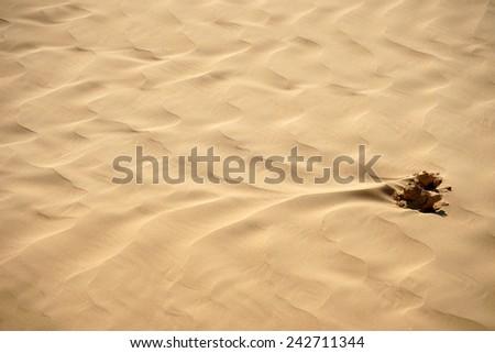 Surface of sand dune in Negev desert                                - stock photo