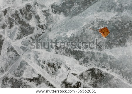 Surface of thick ice layer on lake, weathered by numerous thaw and freeze cycles with brown fall leaf sunken into. - stock photo