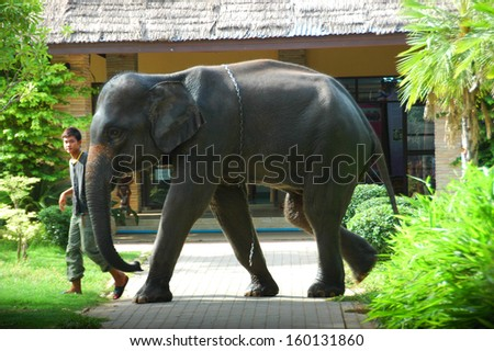 SURIN, THAILAND - JULY 24 : Asian elephants in elephant village perform their show on July 24, 2010 in Surin, Thailand.