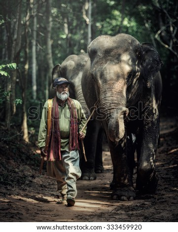 SURIN, THAILAND - OCT 23, 2015: A mahout walking with his elephant to go back home after bathing his elephant at a local lake. Ban Ta Klang is a well-known tourist site in Thailand. - stock photo