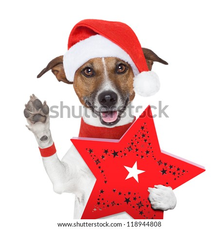 surprise christmas dog with a red present box - stock photo