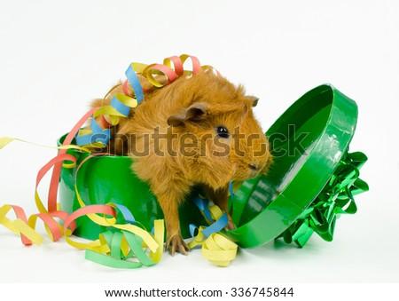 surprise party guest - stock photo