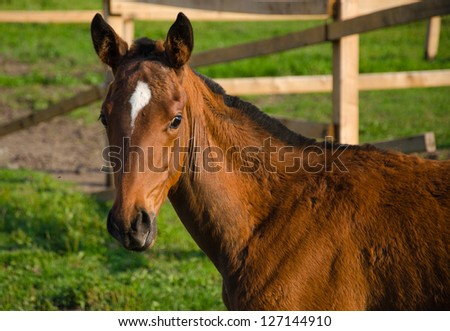 Surprised Foal - stock photo