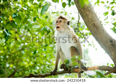 Surprised monkey siting on the tree - stock photo