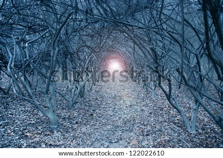 Surreal arch-like trees in a muted grayish dreamlike woods - stock photo