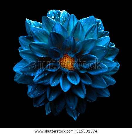 Surreal dark chrome blue flower dahlia macro isolated on black - stock photo