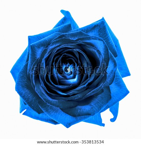 Surreal dark chrome blue rose flower macro isolated on white - stock photo