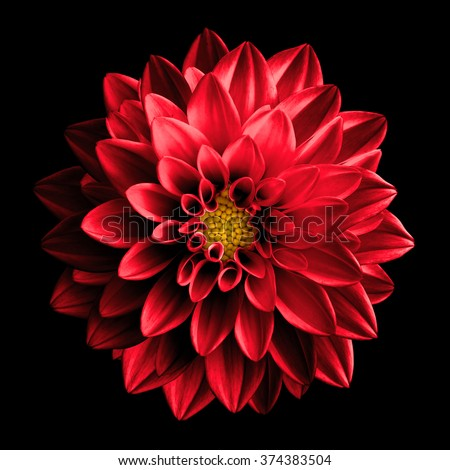 Surreal dark chrome red flower dahlia macro isolated on black - stock photo