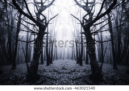 surreal forest with scary trees