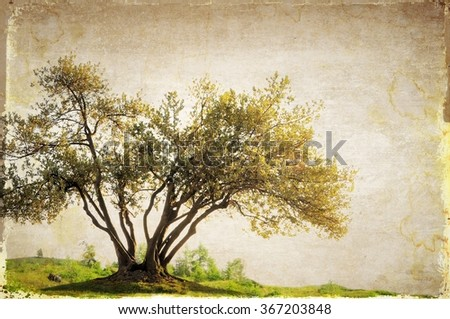 Surreal landscape with single tree in sepia tones - stock photo
