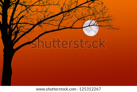 Surreal looking silhouette of a leafless tree and moon against a sunset sky. Plenty of copy space.