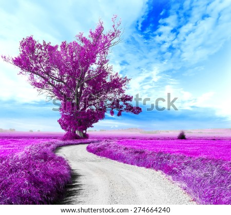 Surreal tree and dream scape.Road through the fields - stock photo