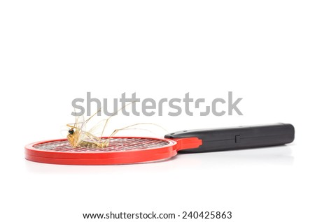 surrealism photography of big death mosquito on mosquito swatter