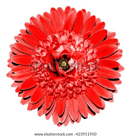 Surrealistic fantasy red flower macro isolated on white - stock photo