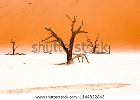 stock-photo-surrealistic-view-to-dead-ac