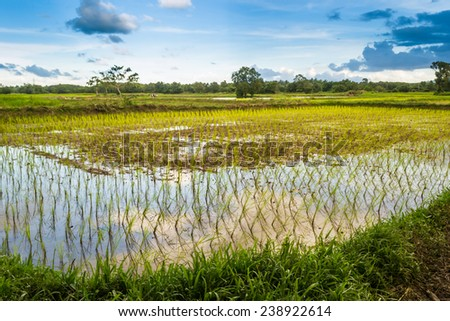 Surrounded by lush green paddy fields, vast. Sky with mountains in the background. - stock photo