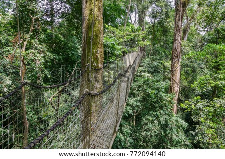 Suspended tree top or canopy walk in rain forest of Nigeria & Suspended Tree Top Canopy Walk Rain Stock Photo 772094140 ...
