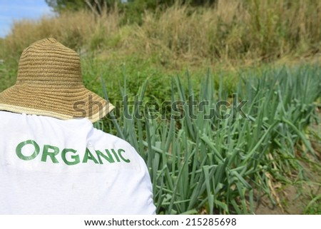 Sustainable Agriculture: Organic farmer harvesting green onion - stock photo