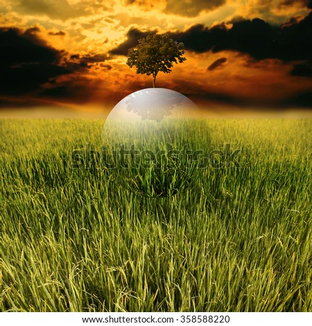 Sustainable living concept, Green globe fly over rice field - stock photo